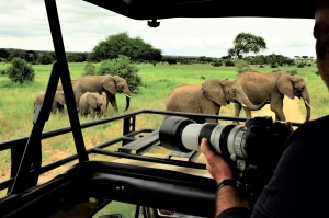 Olifanten dicht bij de auto Tanzania