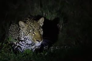 Avond safari, een avontuur op zich