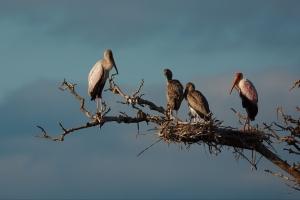 Storks met jongen