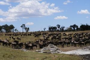 Grote trek / migratie in Tanzania
