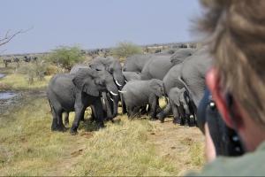 kudde olifanten vlakbij auto
