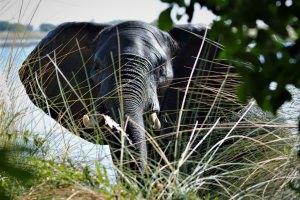 olifant komt het water uit en eiland op