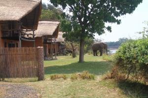 olifant bij huisje in Zambia