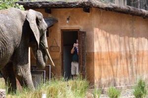 olifant in de rij voor het toilet