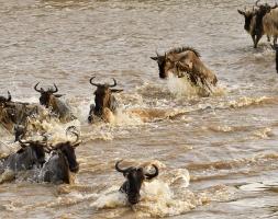 Crossing Mara rivier