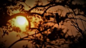 Bee-eater in ondergaande zon