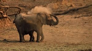 Stof gooiende olifant